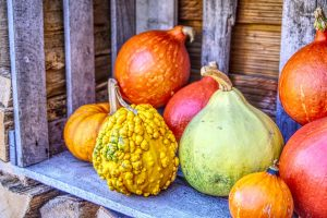 pumpkins and more pumpkins