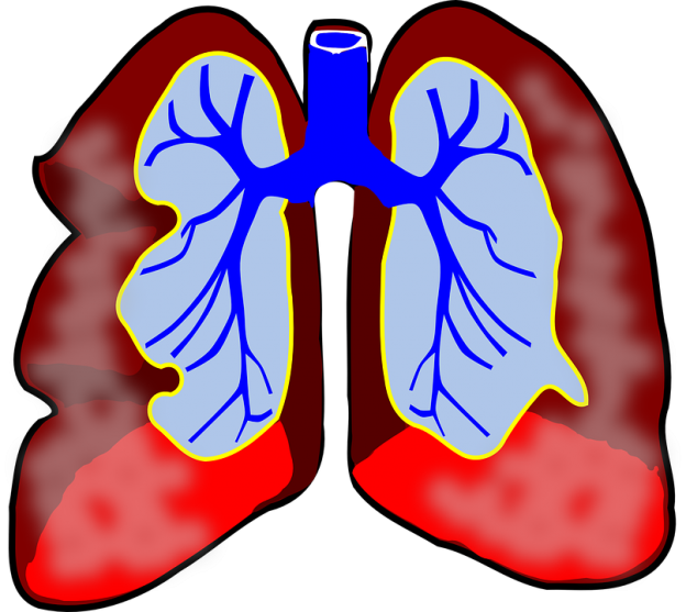 A diagram of the respiratory system